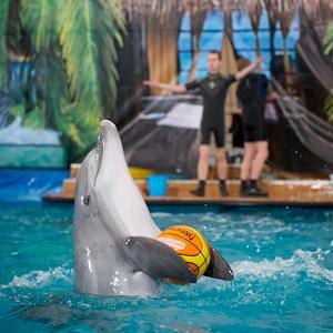 Дельфинарии, океанариумы Сарманово