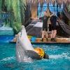 Дельфинарии, океанариумы в Сарманово