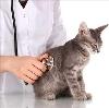 Ветеринарные клиники в Сарманово